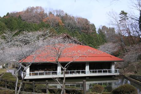 和紙のふるさとの四季桜