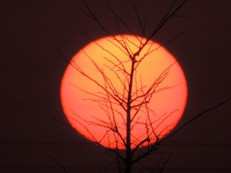 夕陽の血管