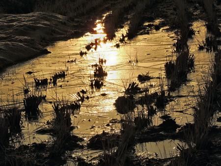 朝の光:凍てた田圃