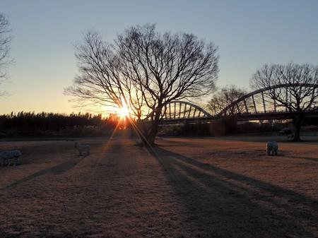 矢作緑地白浜公園の朝の光