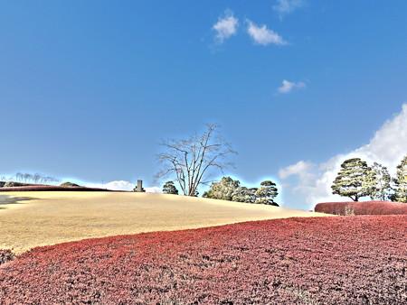 トヨタ鞍ヶ池記念館:芝生の景観
