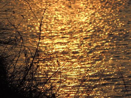 逢妻女川の夕陽の煌き