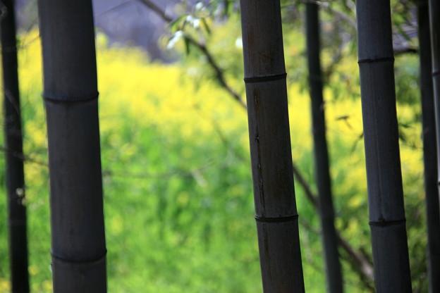 竹林の向こうは春色に