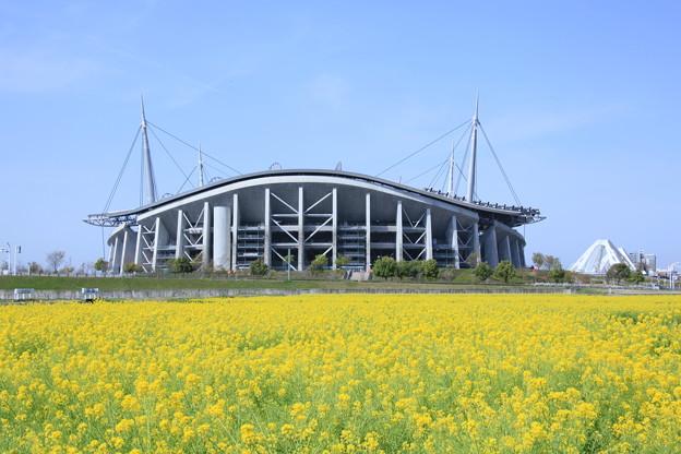 菜の花と豊田スタジアム