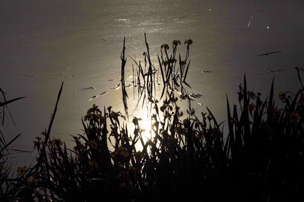 八ッ谷池の燻銀の輝き