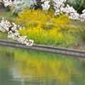 Photos: 春Color