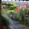 Photos: 萩と彼岸花と蛙の寺