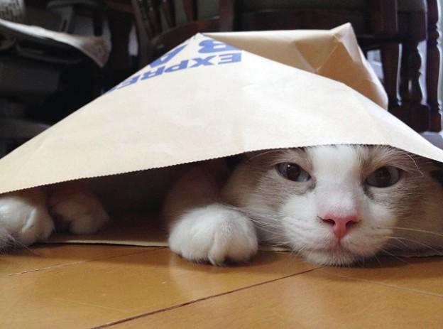 佐川急便もネコ始めたんだよ