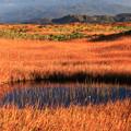 写真: 草紅葉絶景