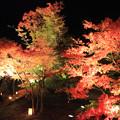 夜の庭園美