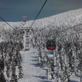 Photos: 夢の樹氷原へ