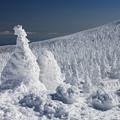 樹氷原の美しさ