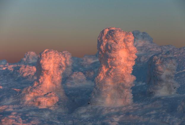 写真: 夕陽で染まる樹氷