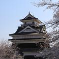 写真: 上山城・桜の頃