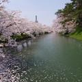 写真: 堀 桜