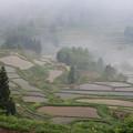 霧に霞む棚田