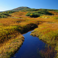 写真: 鮮麗な湿原