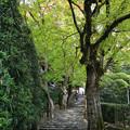 尼寺への参道