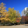 Photos: 秋風爽やかな公園