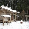 写真: 村の神社