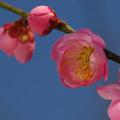 写真: 待ちわびた春