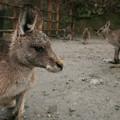 Photos: 長崎バイオパークにて。
