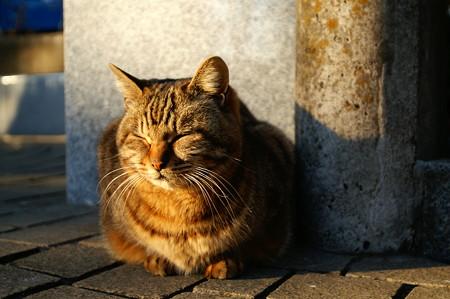 夕日に目をつぶる猫
