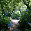 青い花の道