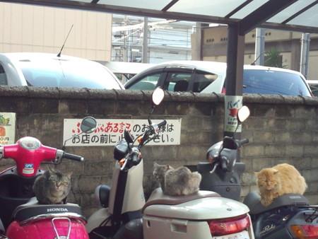 バイク仲間集合?