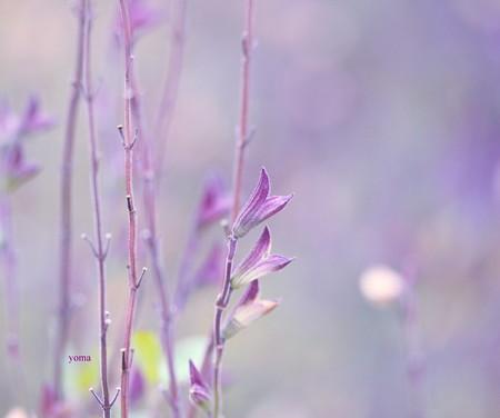 花の後(あと)