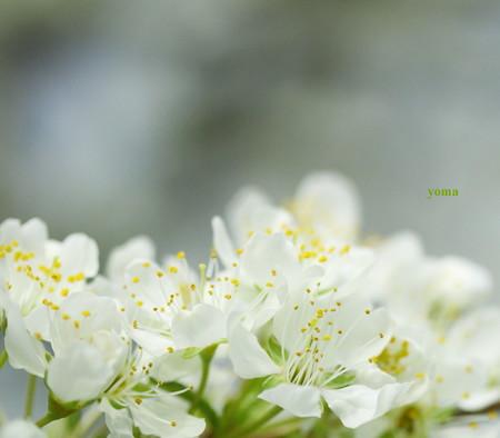 春の夢・・・