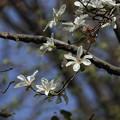 Photos: 散歩道の春 898A2084