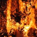 Photos: 伐採した枝の焼却