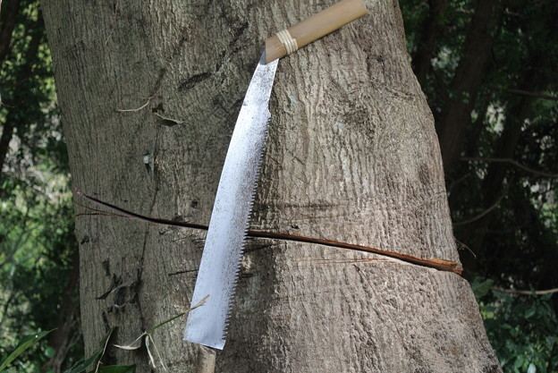 Photos: 防風林伐採に使うノコギリ
