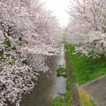 写真: 20070407御用水跡街園