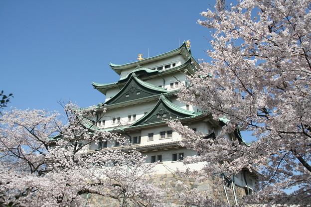 20090407名古屋城桜 (2)