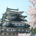 写真: 20090407名古屋城桜