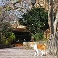 Photos: お花見猫/1