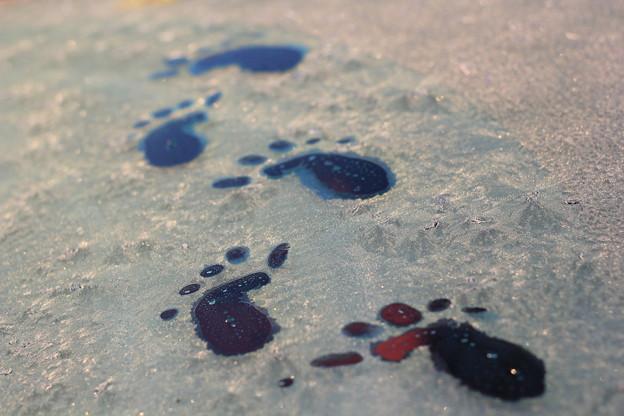 氷の妖精の足跡