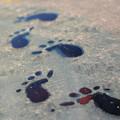 写真: 氷の妖精の足跡