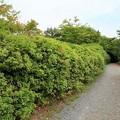 Photos: 嵐山56