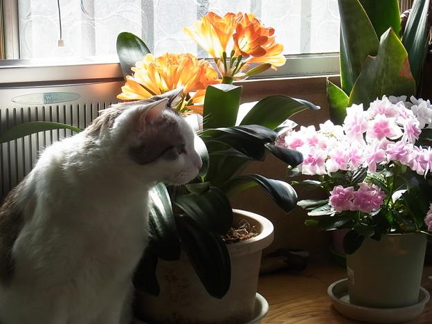 Photos: 花と猫