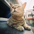 Photos: 無視されて!(Lomo LC-wide)