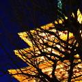 写真: 金ピカ 五重の塔