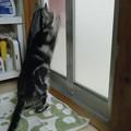 写真: 開けて~!!! ?