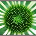 写真: Fermat's Spiral in Green 7-10-12