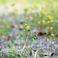 Photos: Field Clover 7-14-12