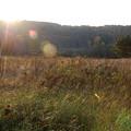 The Field with Milkweeds 10-5-12