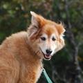 Hiking Dog 10-6-12