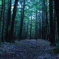 Cyan Forest 10-6-12